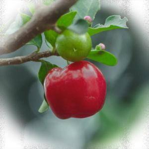 健康を考えてビタミンCを摂るなら 天然のものを選ぶこと!
