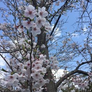 春をお楽しみください♪