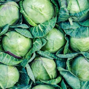 抗酸化作用が強いキャベツ・いつのタイミングで食べる??