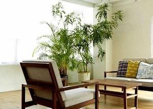 観葉植物などの鉢植え植物の上手な水管理(水やり方法)