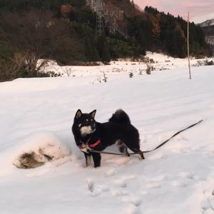 夕方の雪散歩