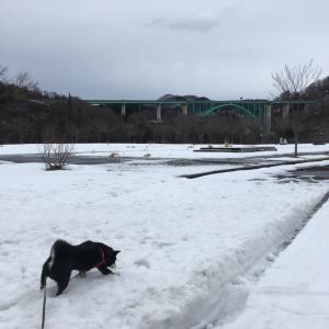 雪少ない公園