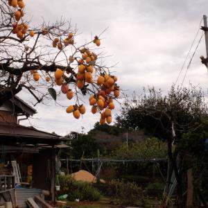 秋らしき空