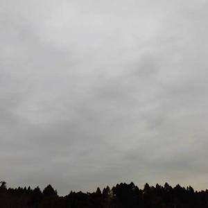 雨が降り 気温上がらず 真冬並み