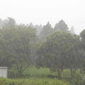 にわか雨 振り回された 午前中