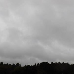 雨が降り 気温上がらず 寒かった