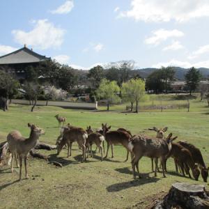 奈良公園に行きたい。 (^-^)