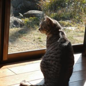 はじめてのお留守番でネコがしてたこと。【ネコと暮らす】