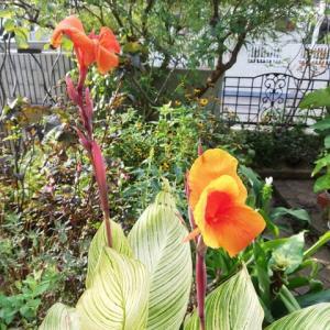 夏の花と秋の花