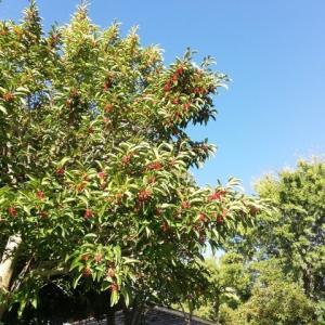 朝散歩と秋の収穫