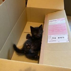 保護にゃん、箱入り息子になる。