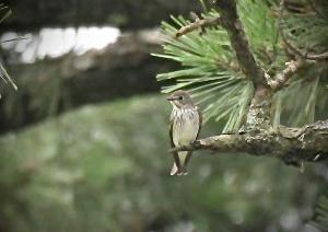 4連休初日(島原から雲仙)の探鳥記録