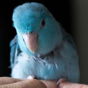 青いカリスマ
