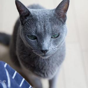 おすまし顔と猫又顔