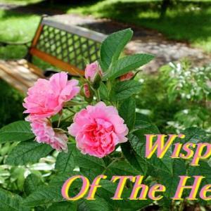 第六回 英語版『耳をすませば』(「Wisper Of The Heart」)で英語学習!