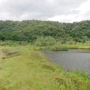 泉(中池見湿地)