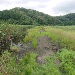 樫曲(中池見湿地)