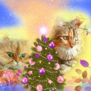 クリスマスはきっと☆彡