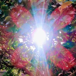 七色のオーラ、太陽の華✴️