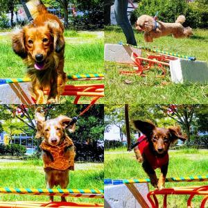犬のジャンプフォームチェック