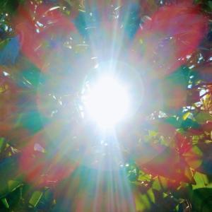 なないろの木漏れ日 は、太陽の華と、いいます。