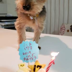 こころくん、17才お誕生日おめでとう