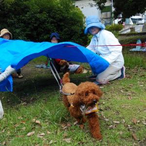 飼い主と愛犬の為の災害レスキューレッスン