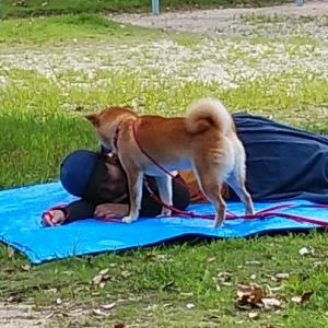 続編 飼い主と愛犬のための災害レスキューシュミレーションレッスンとオリジナルステッカー