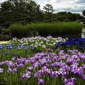季節の花(浜寺公園・長居植物園)