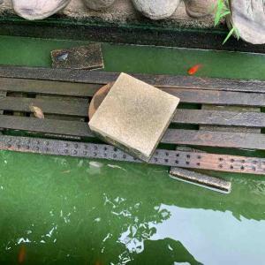 池の濾過装置をつくりました