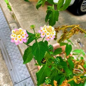 去年の冬から生えてた雑草の花