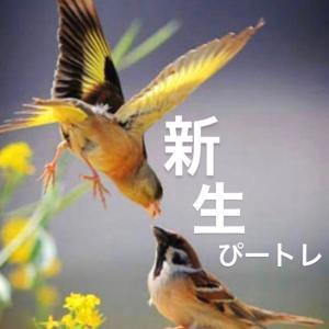 新生ぴートレ2期スターティン❤️❤️❤️詳細✨