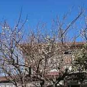 野見神社の花手水 向日葵