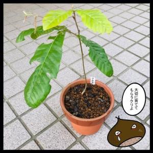 チくりの木 【寄付】