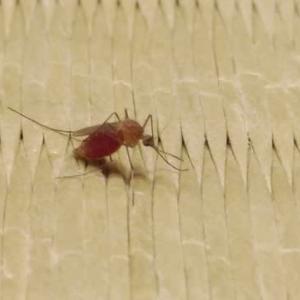 健康100話(781):ハエと蚊が少ない?