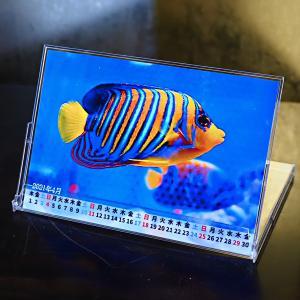 海水魚卓上カレンダーを作ちゃった!