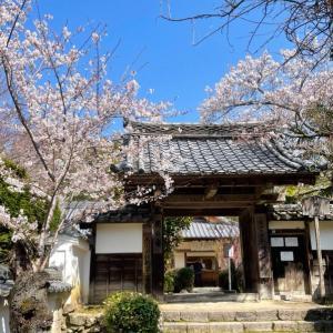【京都西山 花の寺の桜、一年越しに叶って・・・】