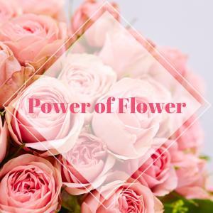 【無料モニター募集】お花を愛する女性へ 悩みをかかえて過ごしていませんか?