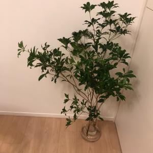 植物を買いました