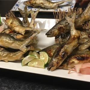 高知の天然アユ食べ比べ思い出~塩焼き背ごし寿司など。