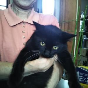 ちょっとKYな黒猫