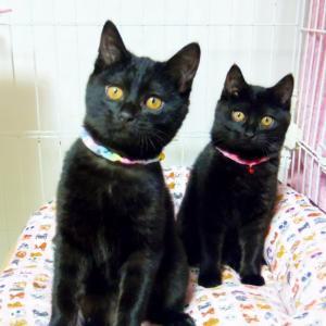 黒猫姉妹トライアルへ