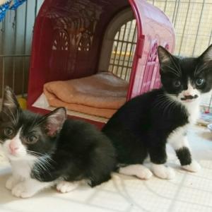 巣立った子猫、里親募集の子猫