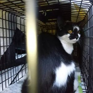 白黒猫さん、新入りと里親募集中