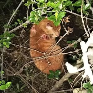 いろいろ心配な外猫たち