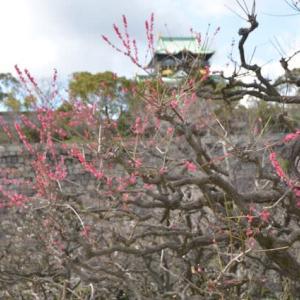 春の大阪城散歩その1