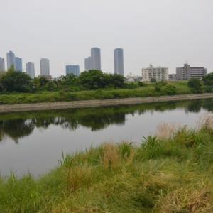 多摩川散策路を歩く