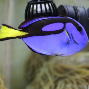 きれいな海水魚!