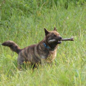 大好きな犬に 擬人化なぜ悪い