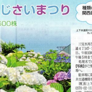 6月の花 アジサイ